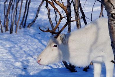arctic-norway